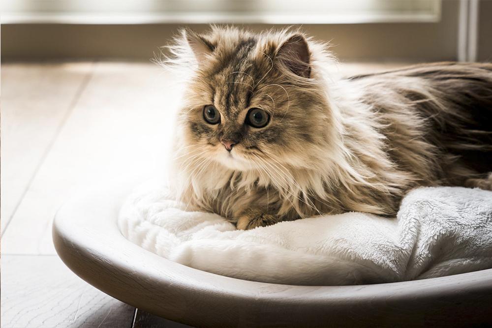 Beautiful Cat Bed