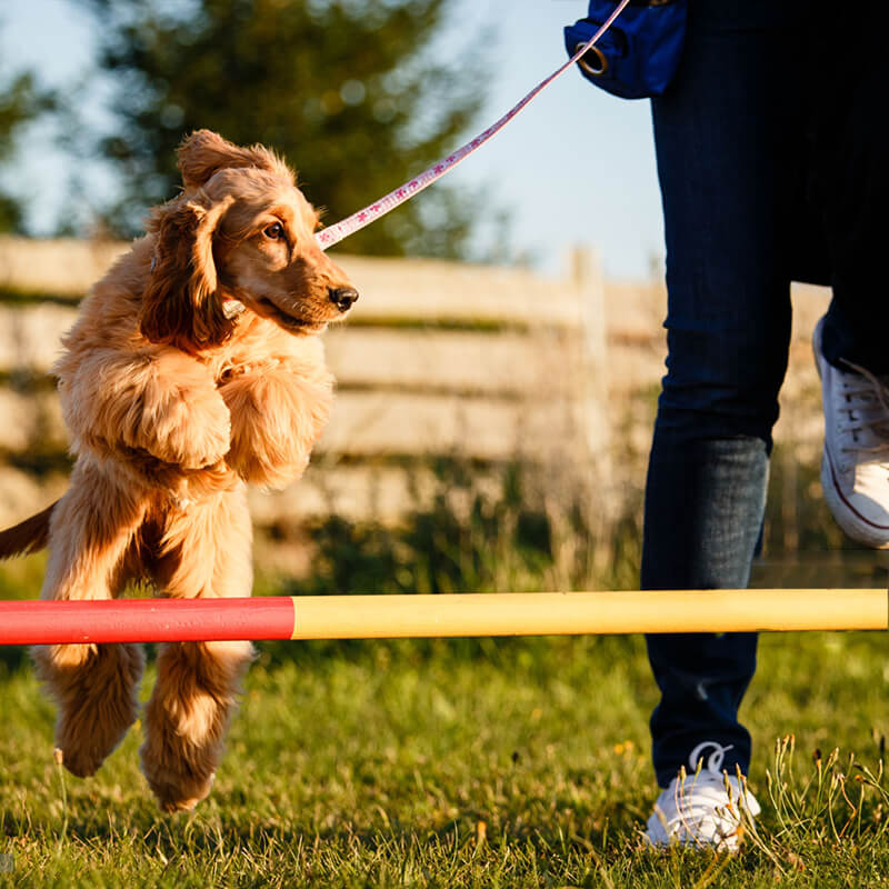 Pet Training Equipment
