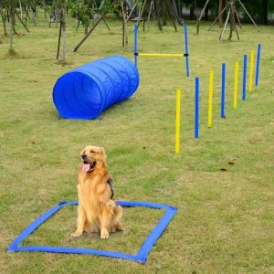 Professional Dog Agility Equipment