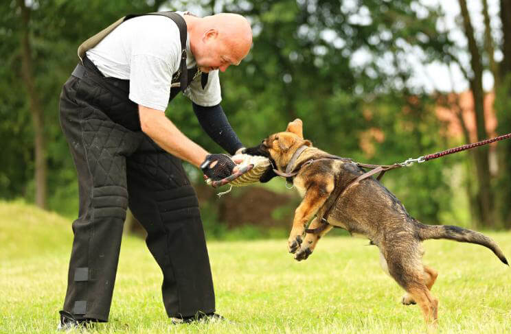 police dog training equipment