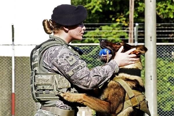How Do Armies Train Dogs?