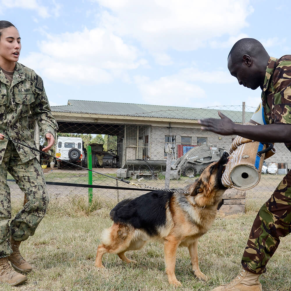 military dog leash