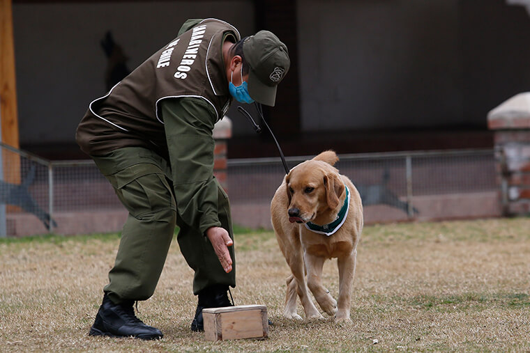 scent detection dog training