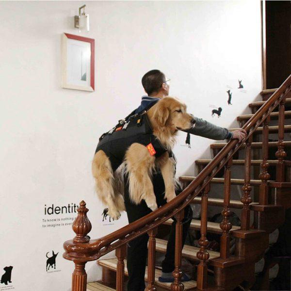 K9 dog carrier