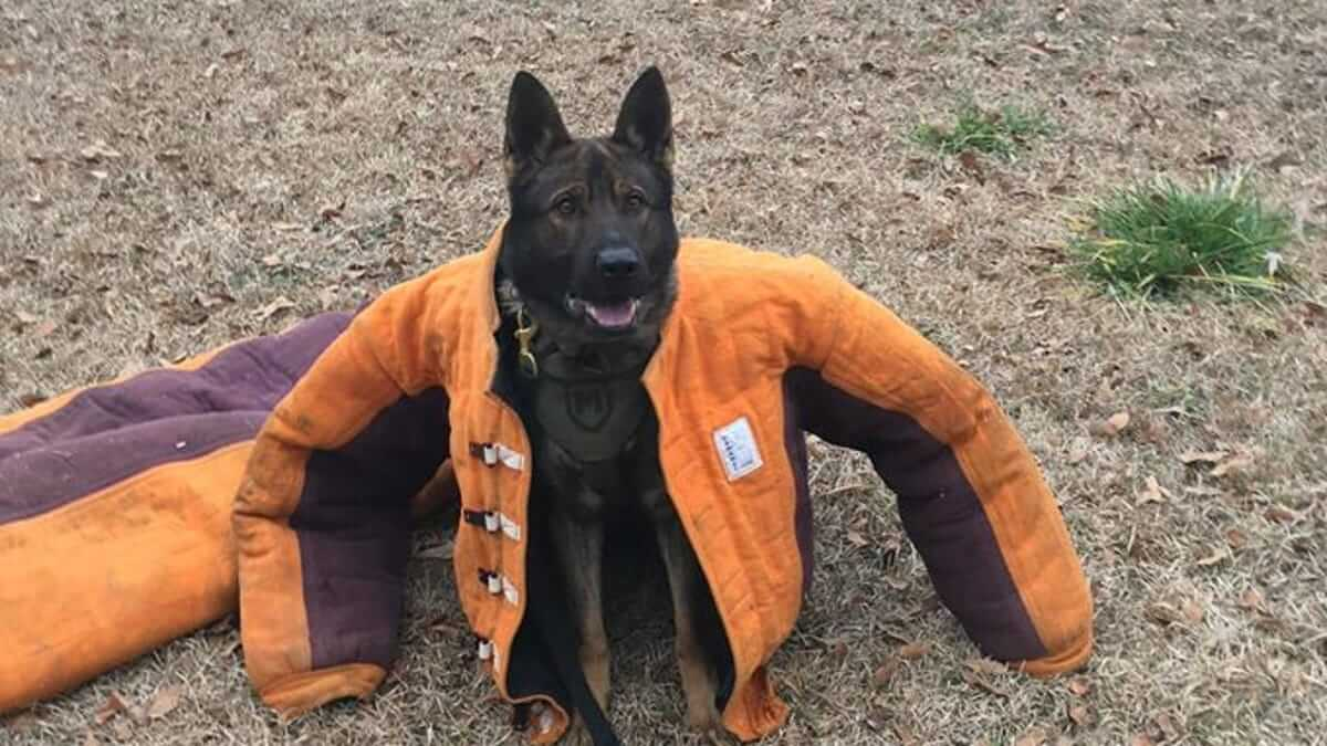 Top 5 K9 Dog Equipment: Must-Haves