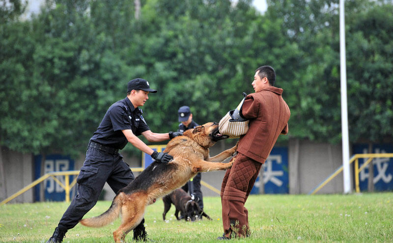 The Benefits of the Police Dog Bite Suit