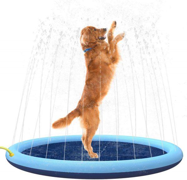 dog splash pad